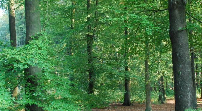 bomen vierkant